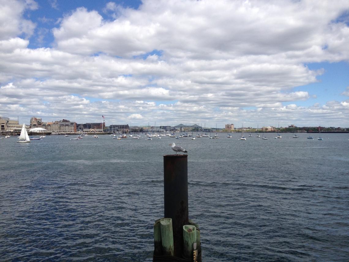 BostonHarborwalk4gull